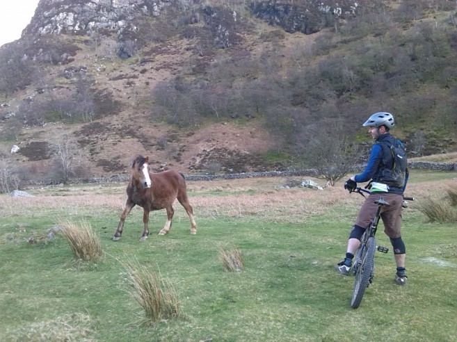 Meeting the Carneddau Ponies whilst mountain biking in North Wales